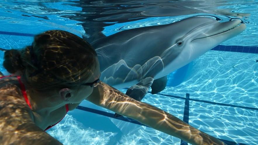 Animatrónicos: Presentan un delfín robot que sustituirá a los animales en cautiverio