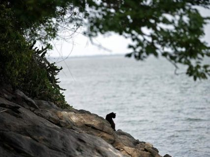 La isla de los gatos: la pandemia devasta zona insular repleta de felinos