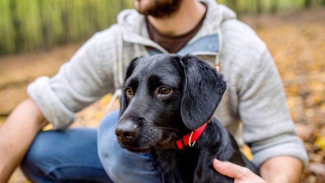 Amistad del hombre con el perro se inició hace 11 mil años