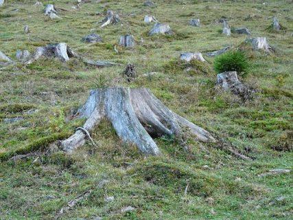 La Serena: Condenan a empresa inmobiliaria por tala ilegal de bosque nativo