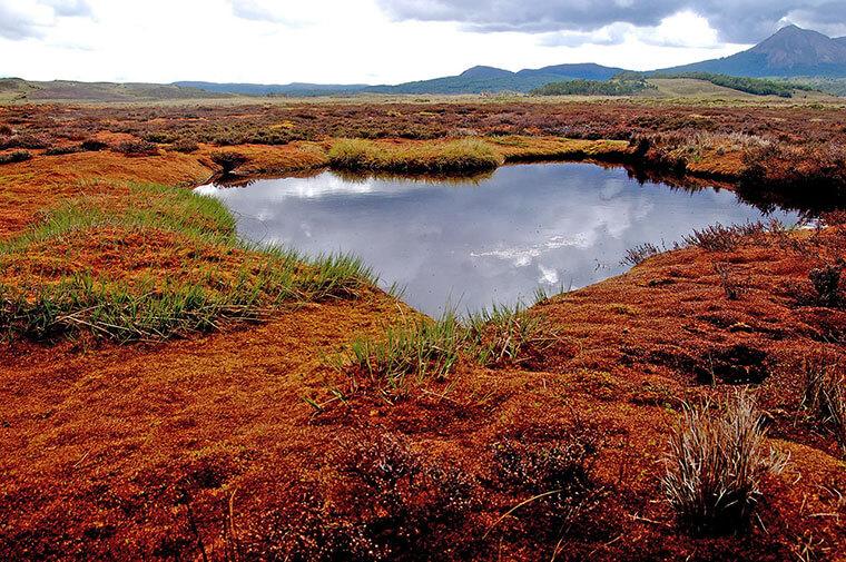 Parlamentarios se unen con el mundo científico y la sociedad civil para detener la destrucción de las turberas en Chile