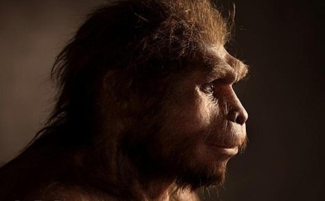 El hallazgo de un cráneo milenario reveló nuevos aspectos de la evolución humana