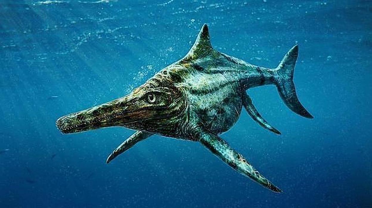 Un niño descubre fósiles de gigantesco dinosaurio de hace 250 millones de años (+Fotos)