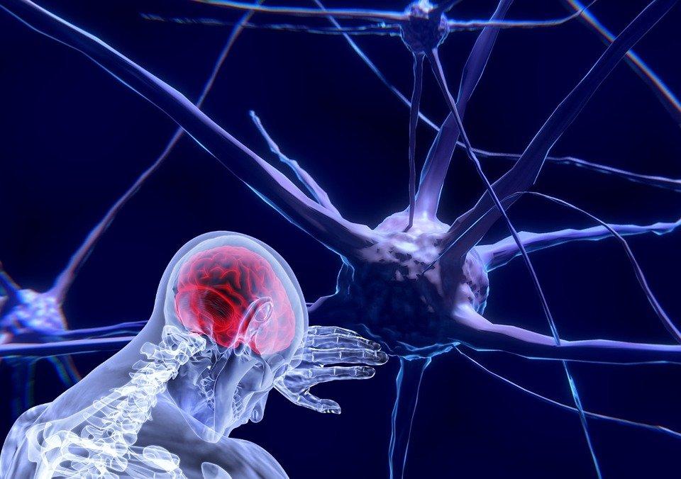 ¿Qué es capaz de usar el coronavirus para entrar en el cerebro?