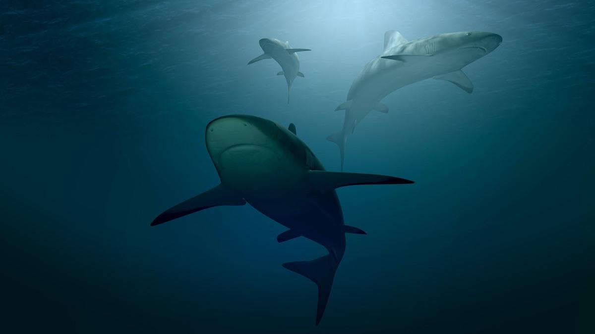 Cinco tiburones en el mar de Chile están en Peligro Crítico de Extinción