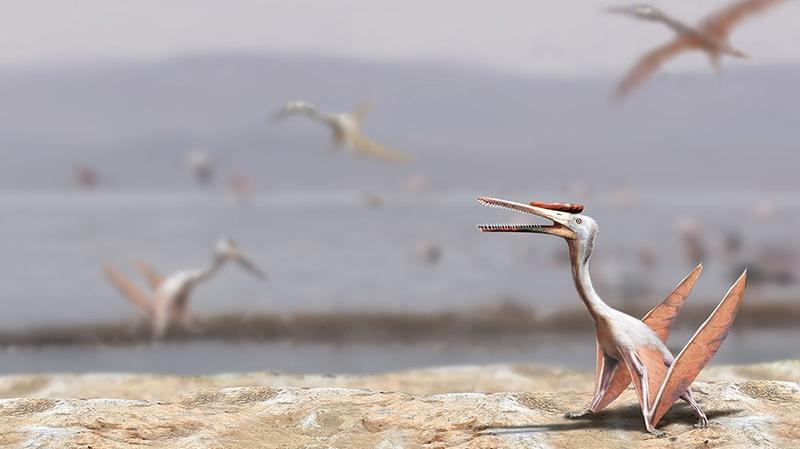 """Pterosaurios de Chile: Los fantásticos """"dragones"""" que dominaron los cielos de nuestro país"""