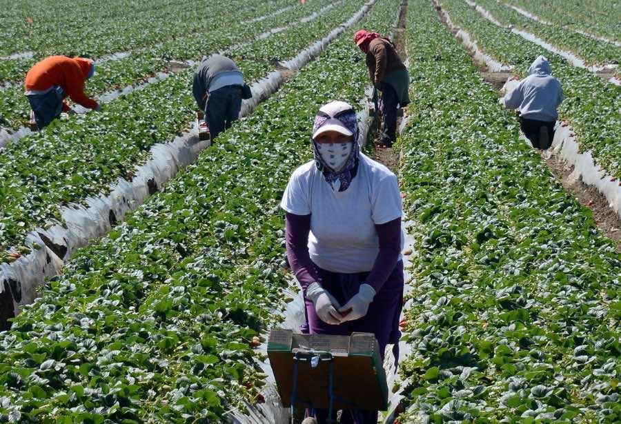 OIT: brecha salarial de migrantes se amplía en países de altos ingresos