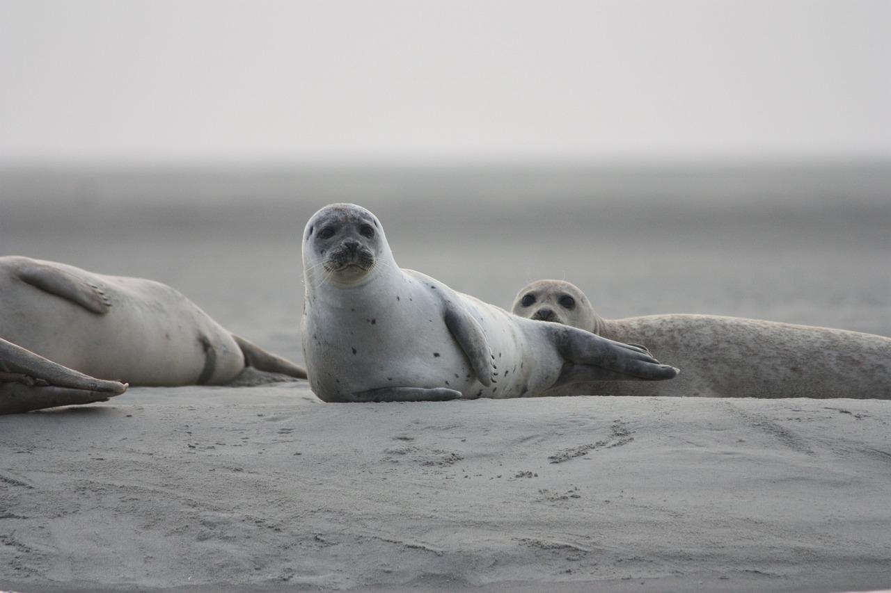 Hallan 300 focas muertas en orillas del mar Caspio
