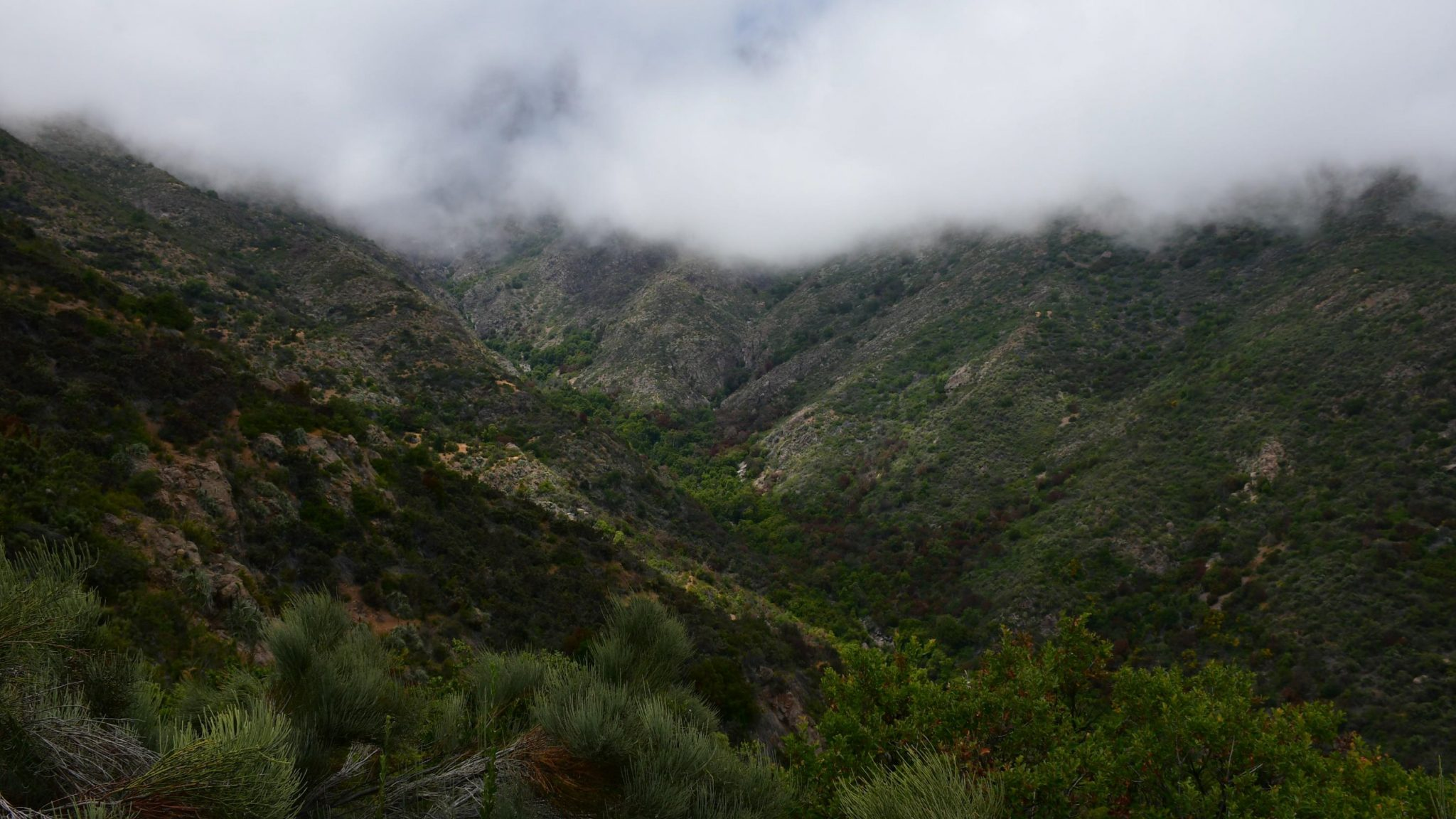Concejo Municipal de La Ligua declara a bosques de olivillos como área de protección ecológica
