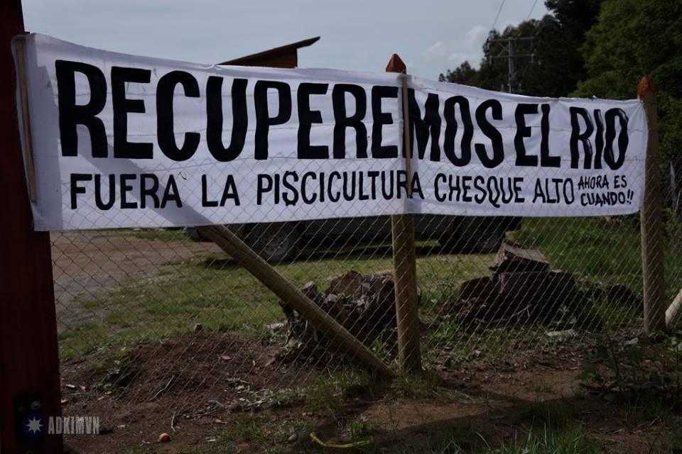 Villarrica: Denuncian grave impacto de la piscicultura en Chesque Alto, una de las zonas más prístinas de Chile