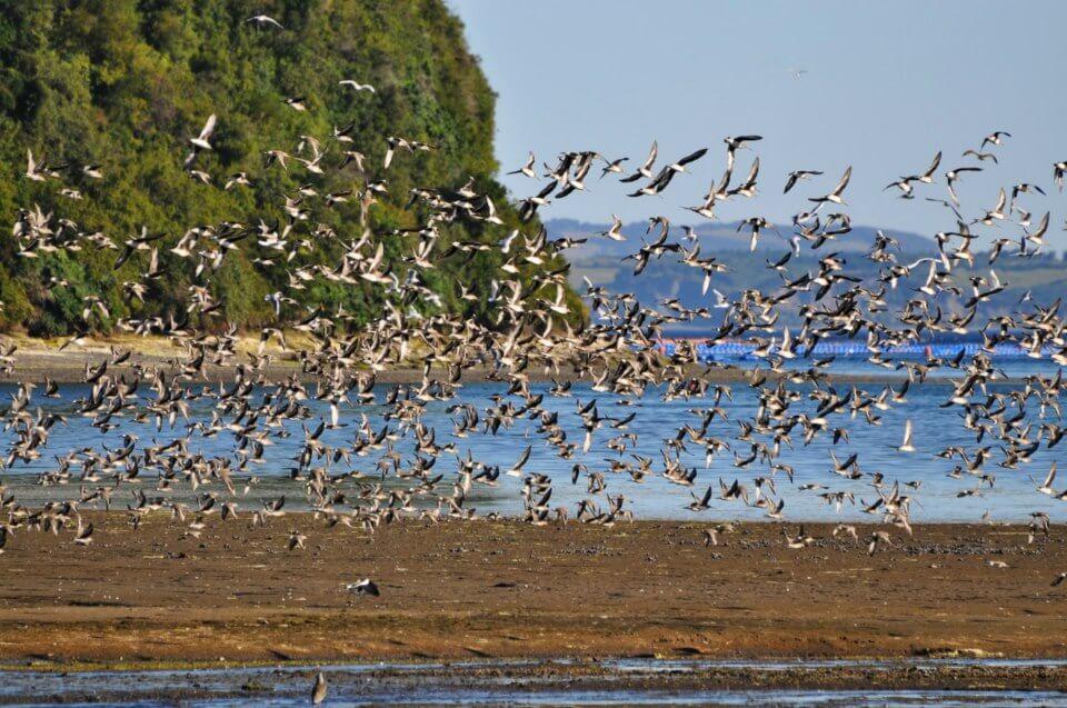 Cuatro nuevos santuarios de la naturaleza permitirán proteger 3 mil hectáreas de humedales en Chiloé