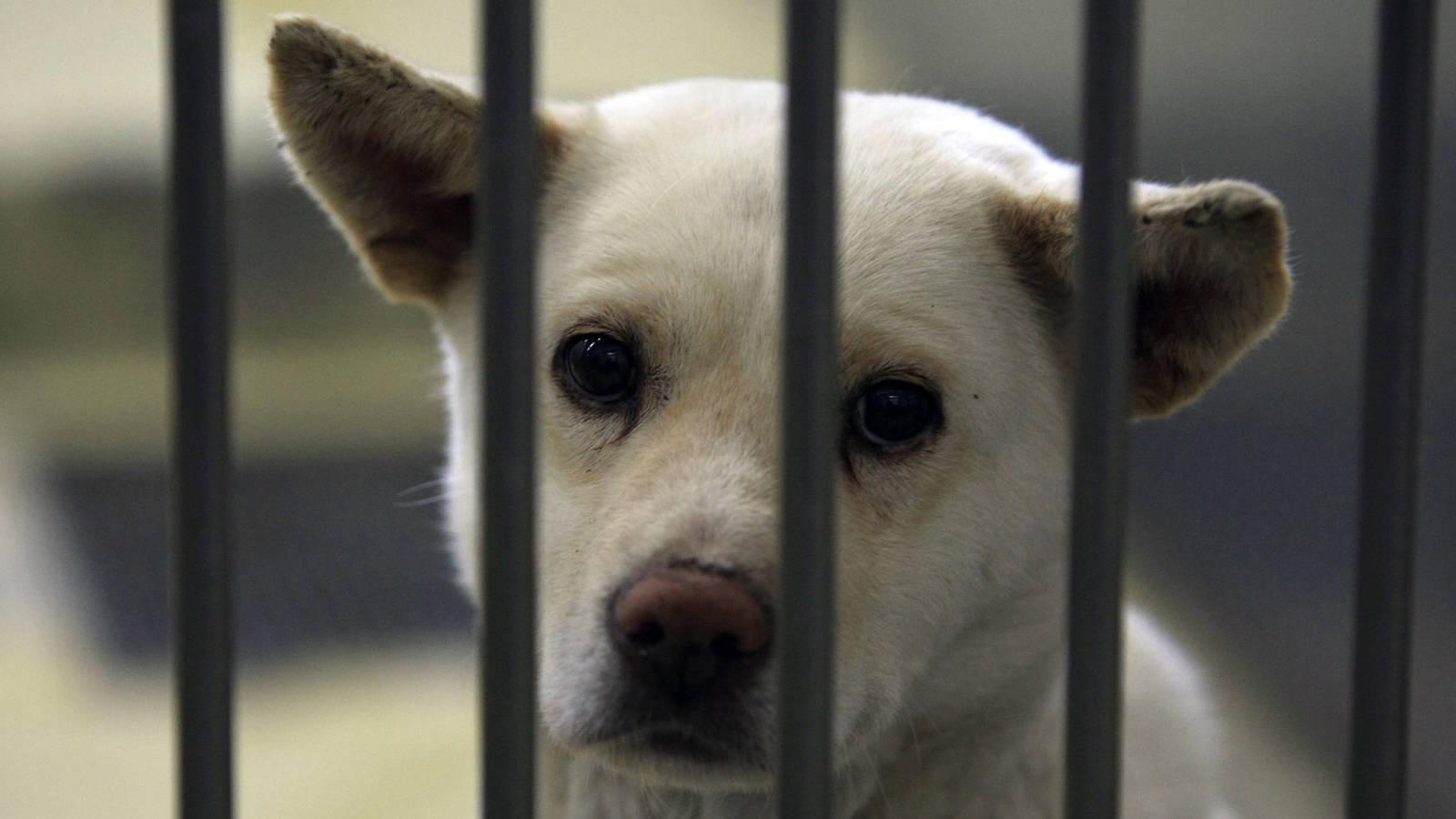 """Alertan que """"coronavirus canino"""" está detrás de un brote de tos en perreras de Canadá"""