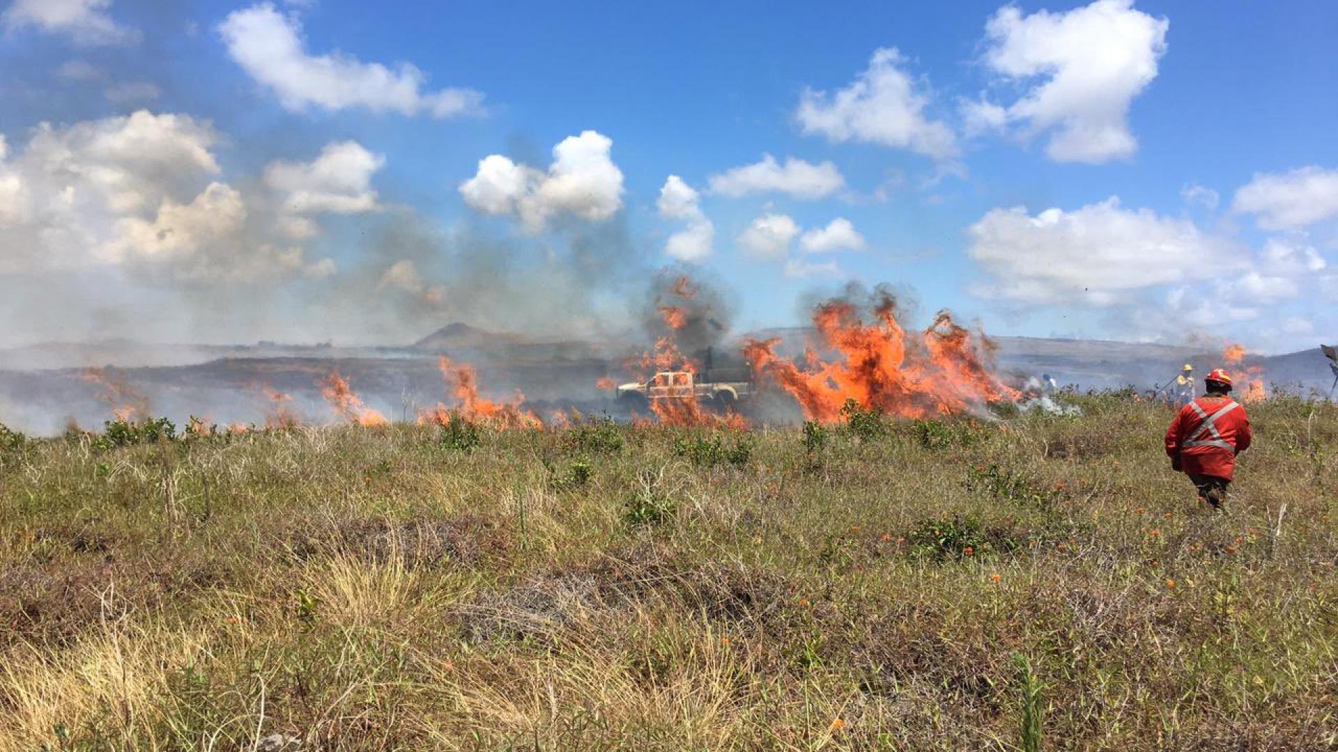 Incendio en Rapa Nui: Monumentos Nacionales hará denuncia ante Fiscalía y pedirá representación del CDE