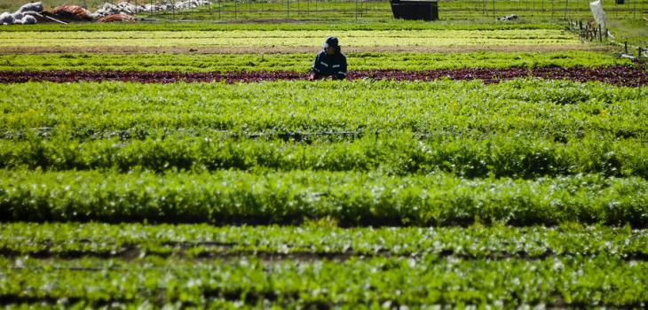 Denuncian falta de medidas para la agricultura familiar campesina por cuarentena en Osorno