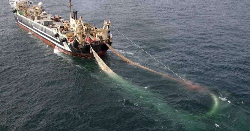 Congreso: Comisión aprobó en general proyecto que restringe pesca de arrastre de la merluza común
