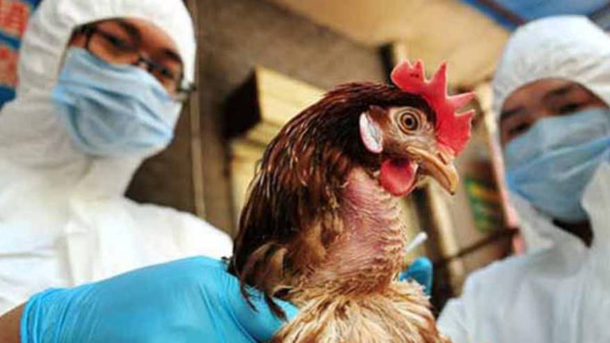 Rusia: Siete empleados de una granja avícola se convierten en los primeros humanos en estar infectado por la gripe aviar H5N8