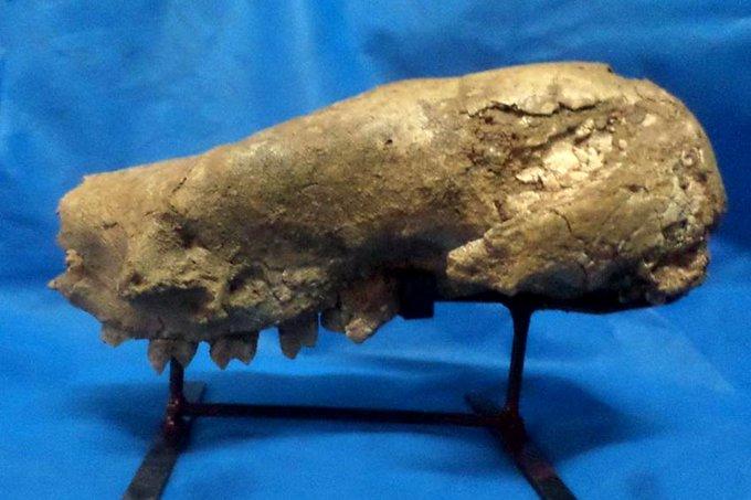 Hallan en Argentina fósil de un perezoso gigante de más de 3,5 millones de años
