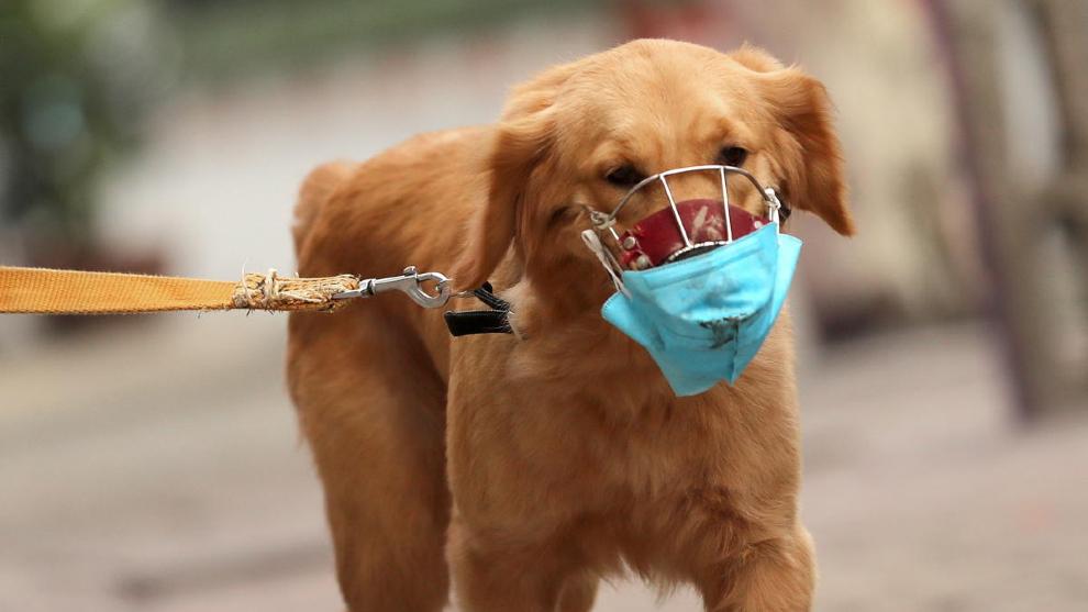 Rusia registró  la primera vacuna  contra Covid-19 para animales