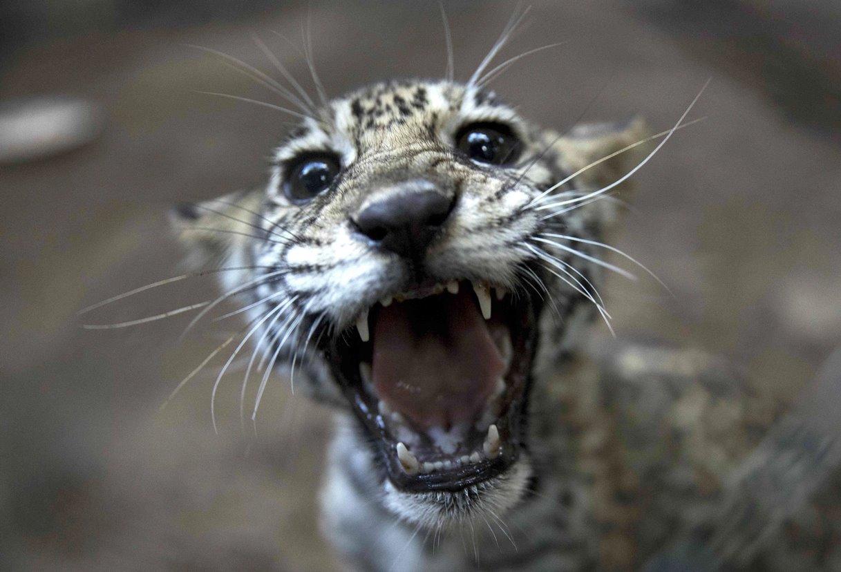 Un zoológico en Nicaragua libera a 83 animales en cautiverio (+Fotos)