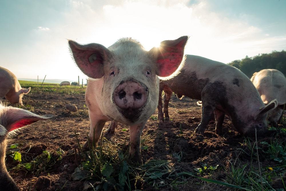 Acuerdo para incluir a los animales en la Nueva Constitución suma más de 200 candidaturas constituyentes