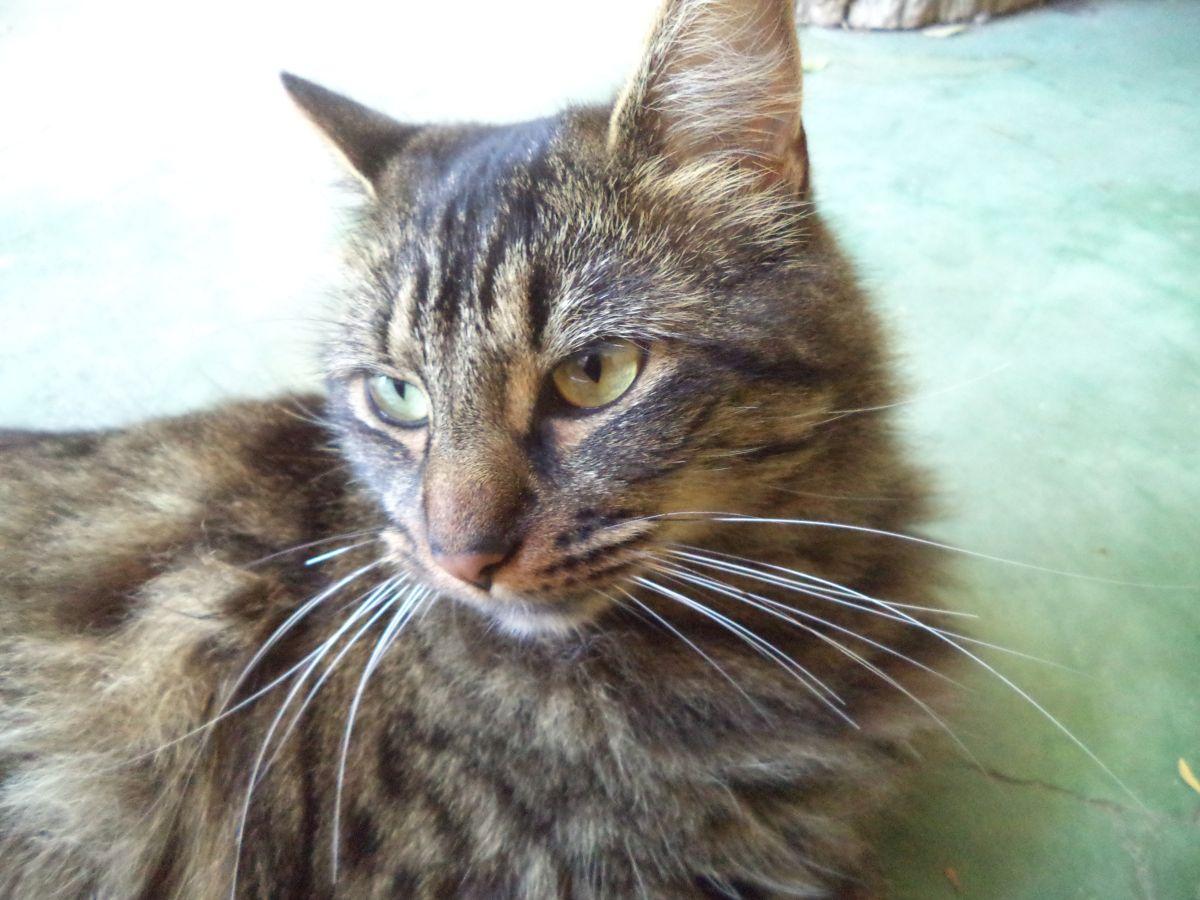 Hasta el 2 de abril: Sernac abre consulta ciudadana por caso de alimentos «Master Cat Gatitos»