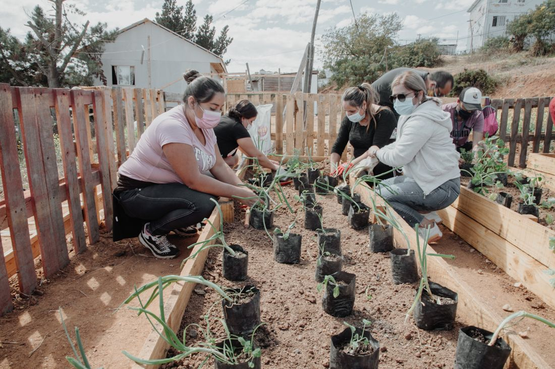 Soberanía alimentaria: Valparaíso avanza en la construcción de nuevas huertas comunitarias