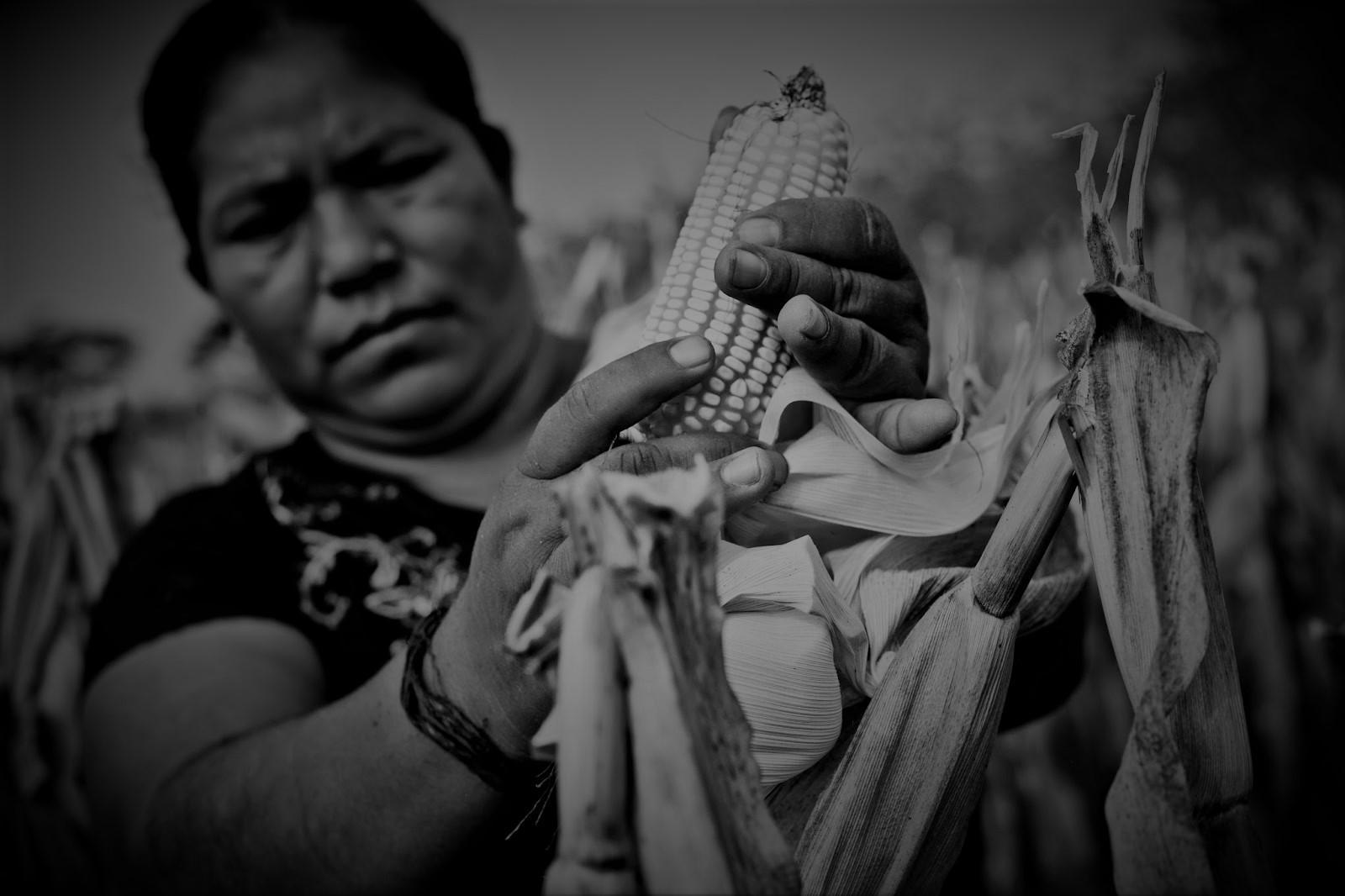 Mujeres tienen menos de 30% de títulos de derechos agrarios en México