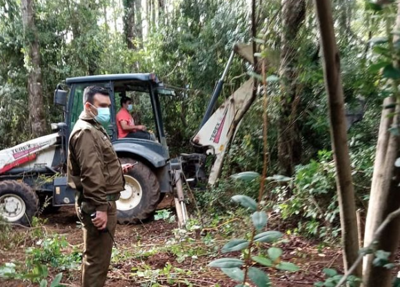 Denuncian tala ilegal por parte de empresario al bosque nativo en Pucón afectando a tres cementerios mapuche