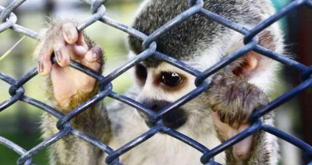BUAP va contra el tráfico de vida silvestre