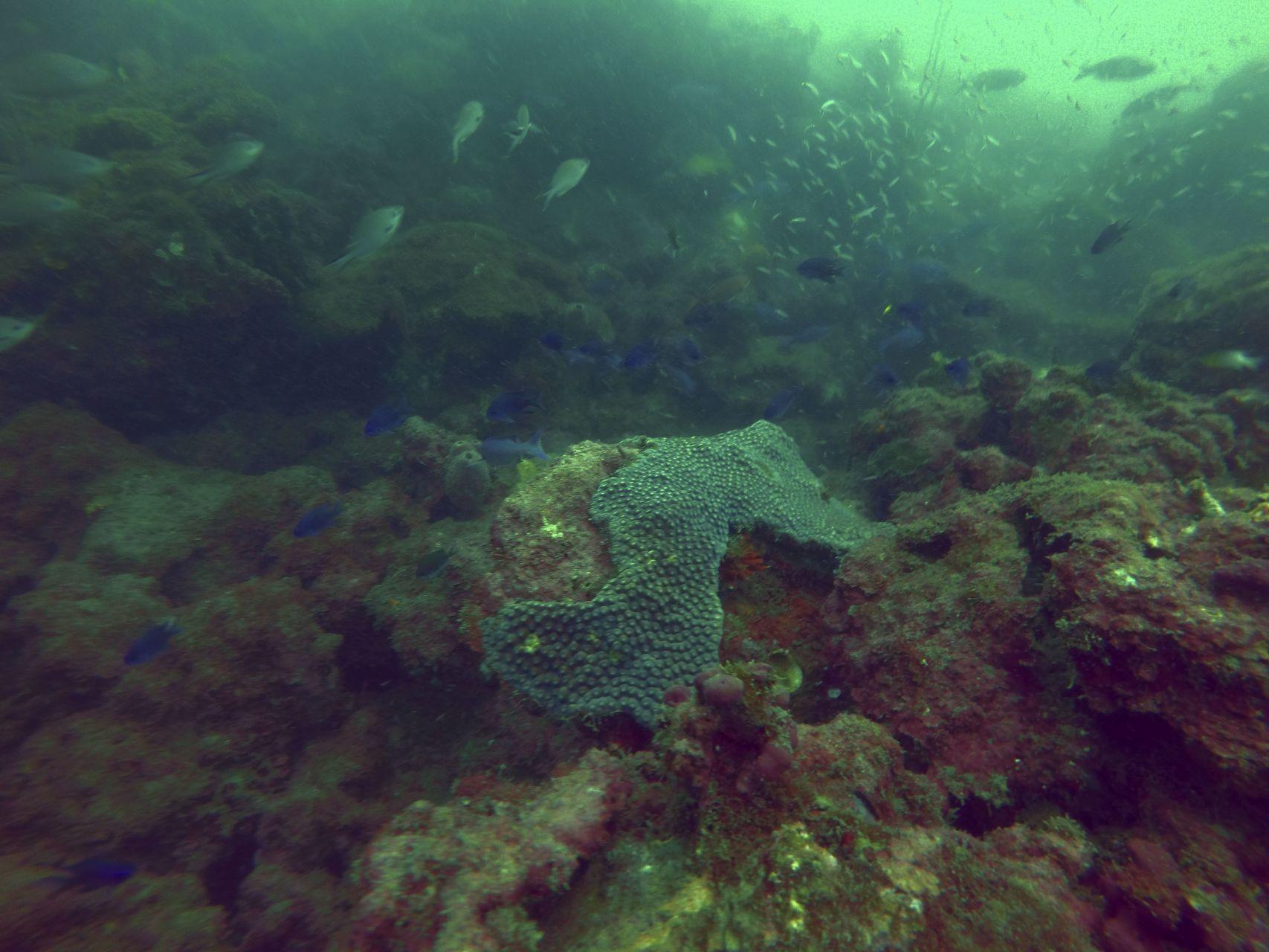 México perdería más de 6 mil kilómetros de arrecifes