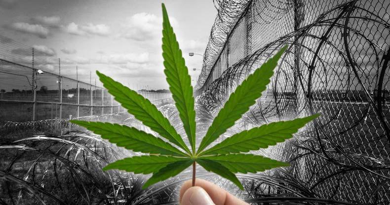 Acusan malos tratos y abusos a profesor encarcelado en Rancagua por cultivar tres plantas de cannabis medicinal para tratar depresión