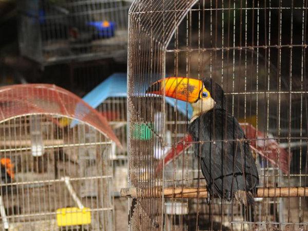 Llama Senado a extinguir compra-venta de animales exóticos