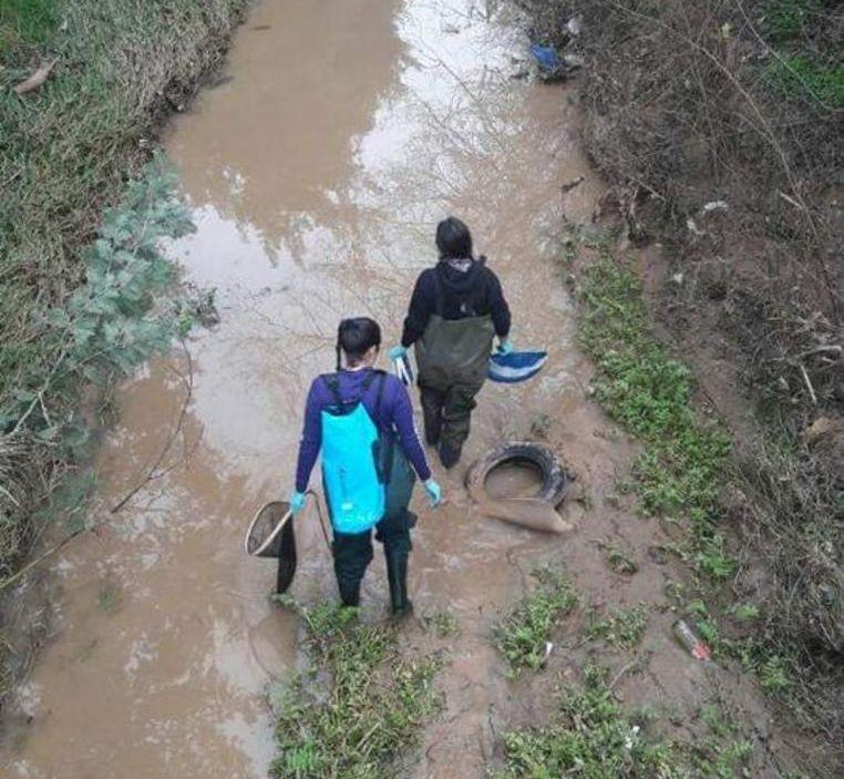 Vecinos rechazan construcción de mega proyecto inmobiliario en Villa Alemana y exigen proteger humedal urbano del sector