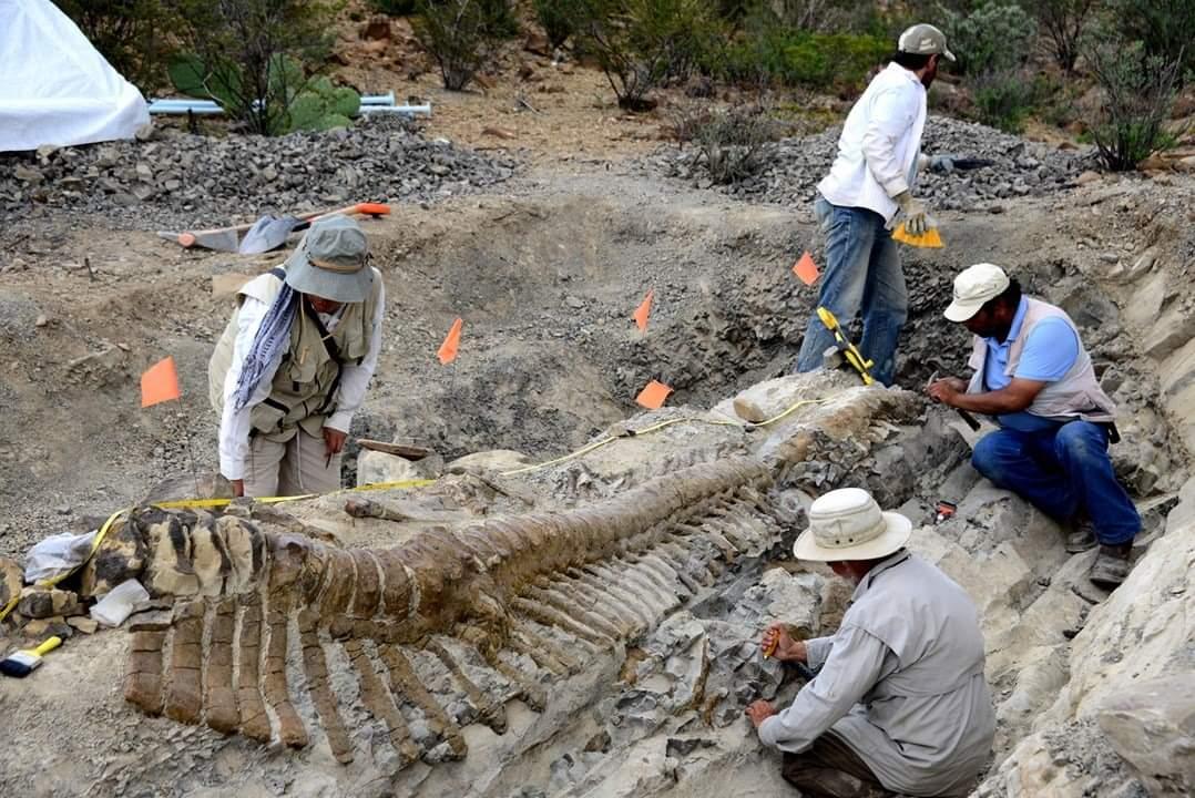 Identifican una nueva especie de dinosaurio: Tlatolophus galorum