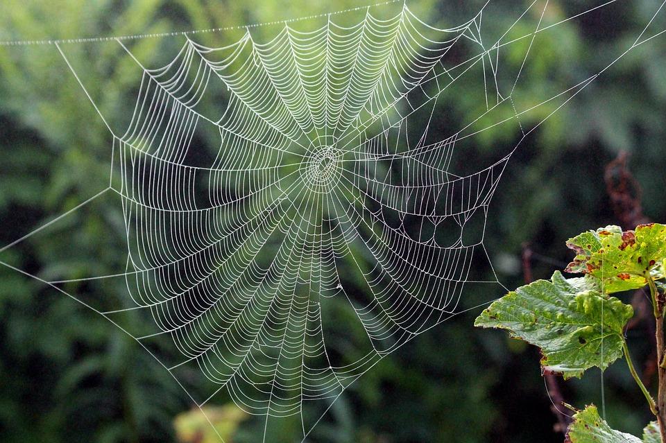 Descubren una especie de araña jamás descrita anteriormente