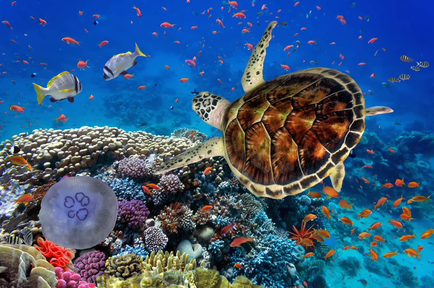 Festejo a la biodiversidad, en medio de su extinción