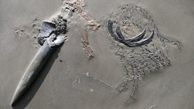 Calamar prehistórico, a medio comer, una nueva clase de fósil