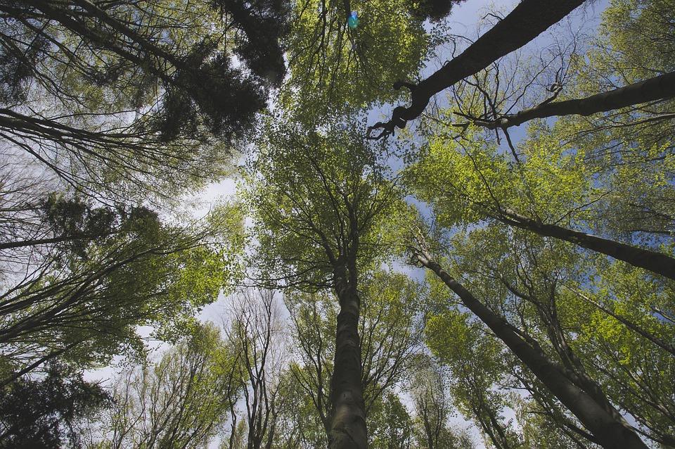 Un dinosaurio de hace 200 millones de años crecía como los árboles
