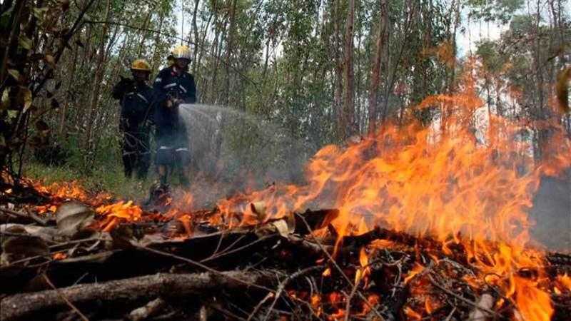 Incendios acaban con bosques en Guatemala: Casi 9 mil hectáreas consumidas en lo que va de año