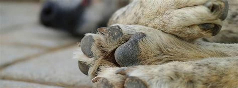 Municipalidad de Putaendo presentará acciones legales por envenenamiento masivo de animales