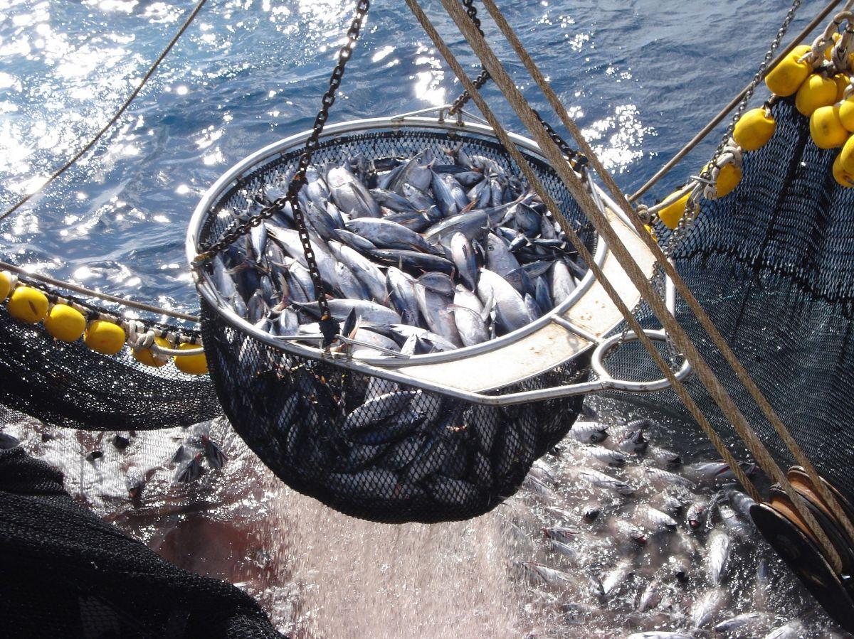 Campaña #IndividuosNoToneladas busca visibilizar la crueldad a la que vive expuesta la fauna marina en la industria