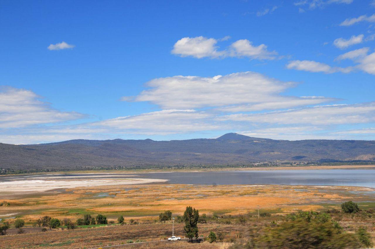 Peligra migración de aves ante extinción de lago de Cuitzeo
