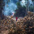 ocupación ilegal amazonía