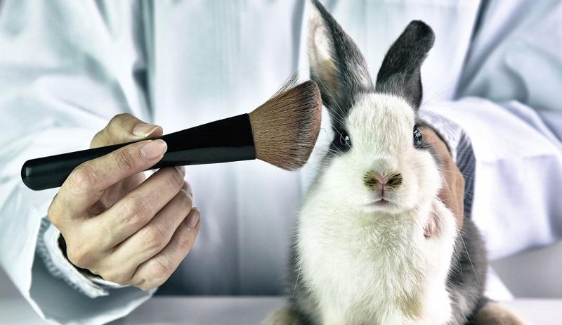 México prohíbe pruebas cosméticas en animales