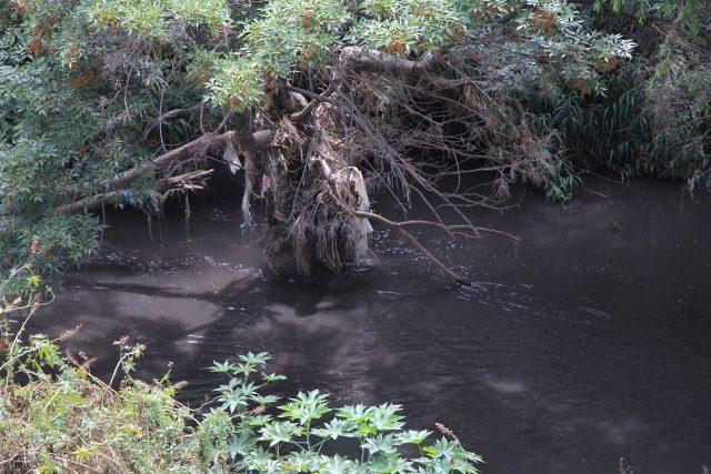 Va en aumento la contaminación en el río Atoyac