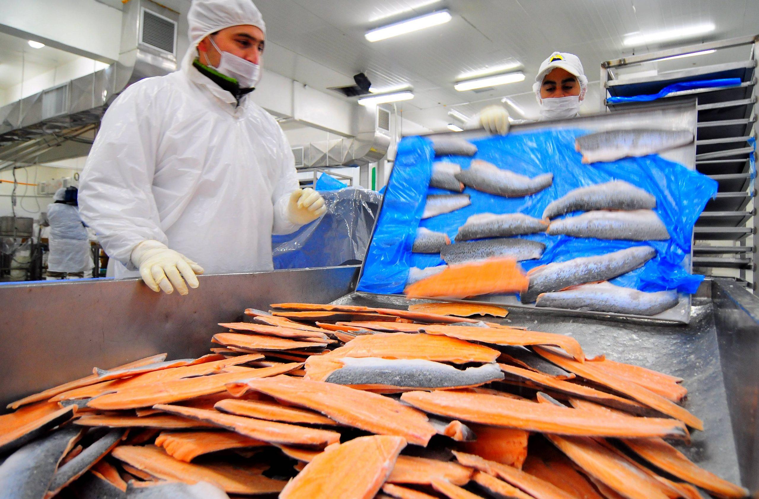 Desde 2019 Rusia ha bloqueado acceso a salmones chilenos tras detectar sustancias cancerígenas