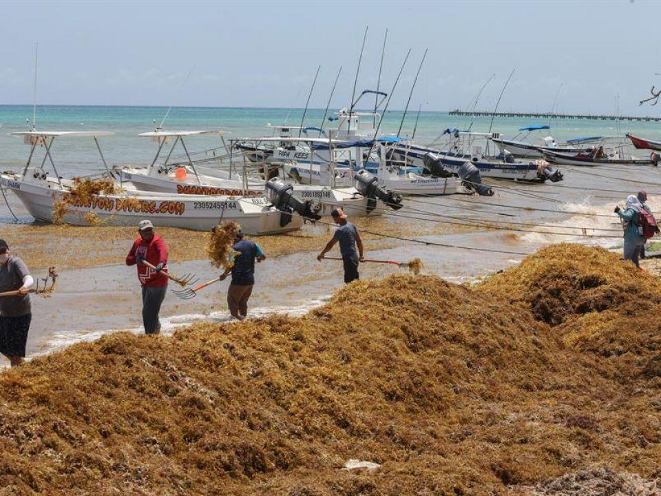 Sargazo ya invade a Quintana Roo