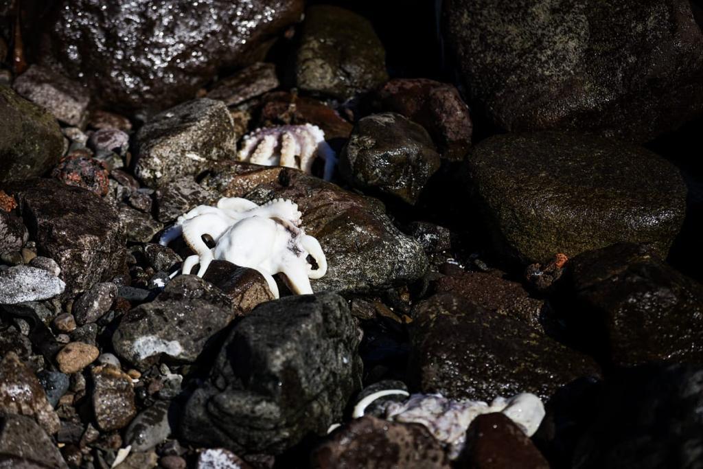 Arica: Concejo Municipal convoca a reunión extraordinaria por masiva mortandad de especies marinas en playas de la zona
