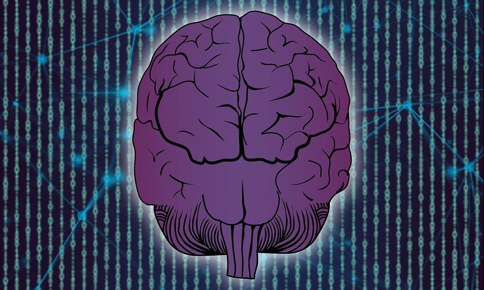 cerebro alimentos