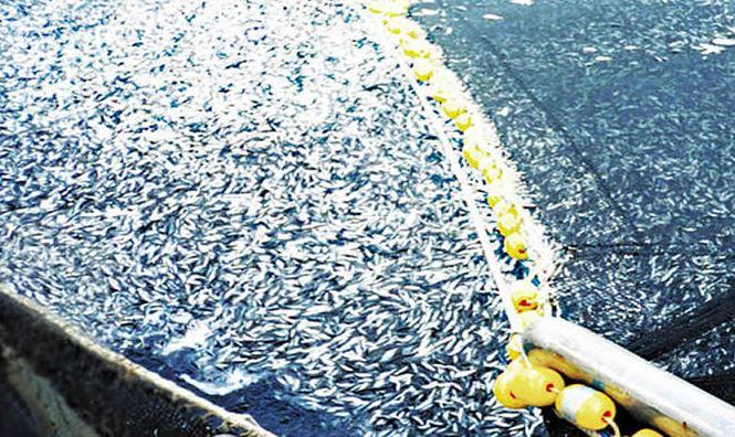 Organizaciones medioambientales exigen cancelar consulta pública sobre política acuícola que busca perpetuar modelo depredador